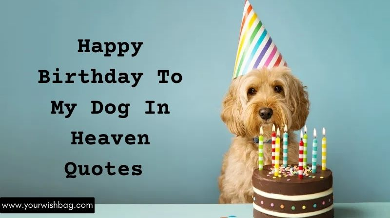 Happy Birthday To My Dog In Heaven Quotes [2021]